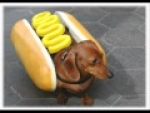 Following My Wiener Around